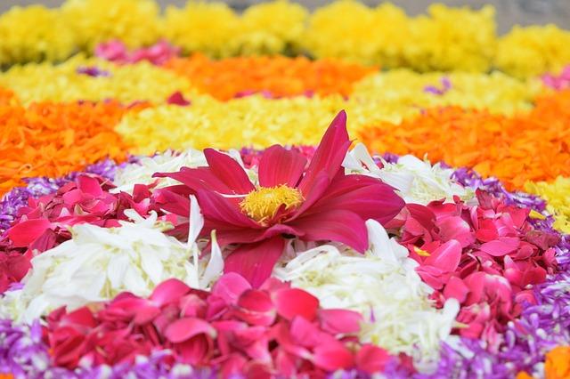 Onam festival - Pookkalam